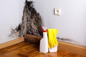 prevent mold