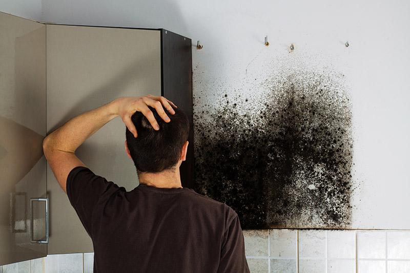 where mold can grow